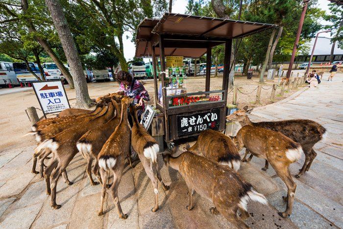 Peli o manta. Japón mainstream. Ciervos de Nara