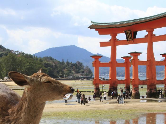 Japon. Peli o manta.