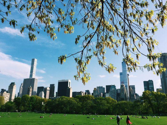 NY x10. Peli o Manta. Central Park